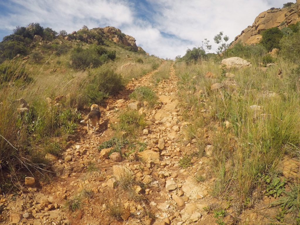 Just n Motion • Trail running at White Hills Guest Farm